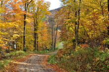 Autumn Colors Along A Trail In Vermont