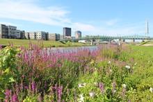 Riverscape In Dayton