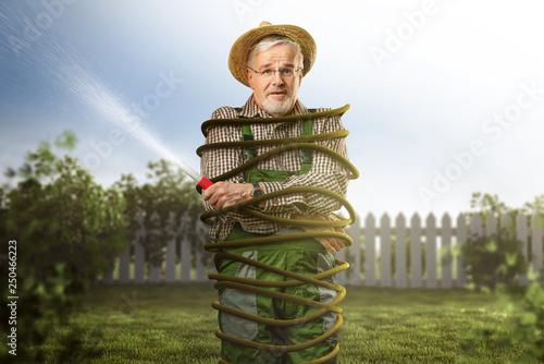 Fotografie, Obraz Überforderter Gärtner ist mit Schlauch gefesselt
