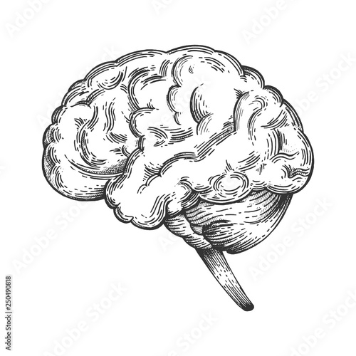 Human brain schematic vintage sketch engraving vector illustration. Scratch board style imitation. Black and white hand drawn image. Wall mural