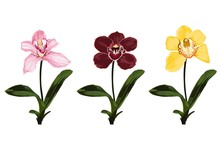 Collection Of Colorful Orchid ...