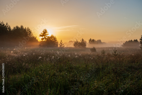 Tuinposter Chocoladebruin colorful sunrise sunset in misty summer meadow