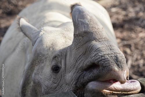 Foto auf Leinwand Nashorn Neushoorn