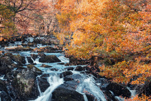 Swallow Falls At Autumn In Sno...