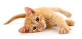 Fototapeta Zwierzęta - Small brown kitten.