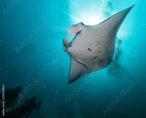 Giant manta ray with two divers silhouettes Wallpaper Mural