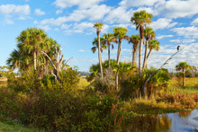 View Of Wildlife And The Natural Landscape At Orlando Wetlands Park In Orange County, Florida