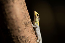 Close Up Of Lizard On Tree Trunk In Forest