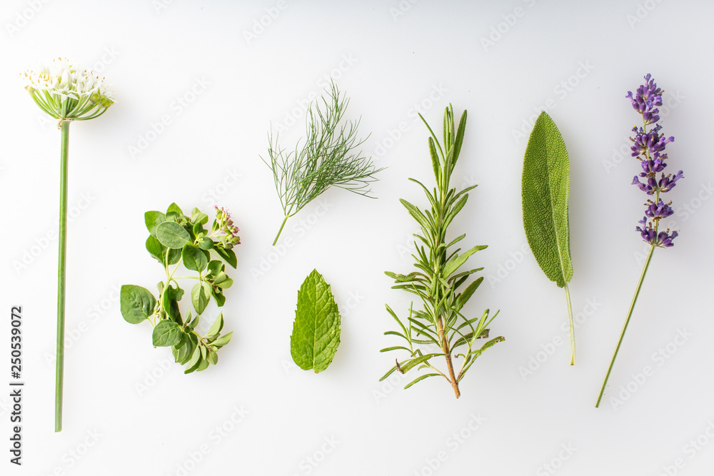 Fototapety, obrazy: fresh herbs and spices on a white background