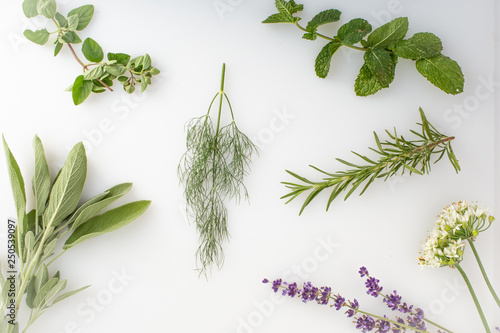 fresh herbs and spices on white background Wallpaper Mural