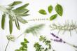 Leinwanddruck Bild - fresh herbs and spices
