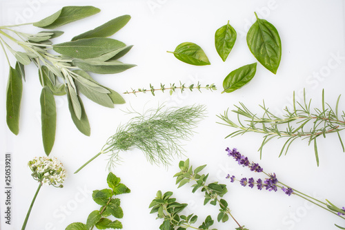 fresh herbs and spices Canvas Print
