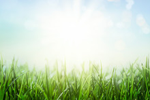 Background With Green Grass An...