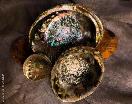 Canvas Print Three Abalone Shells