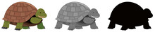 Tortoise Set Of Different Variations