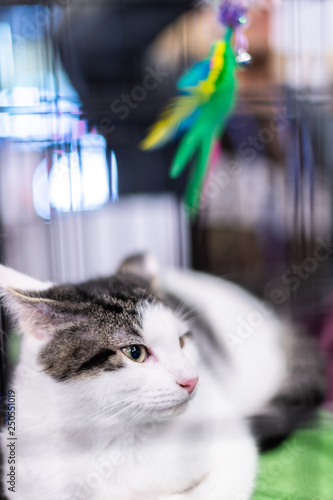 Fotografie, Obraz  Vertical portrait of one sad white tabby cat kitten in cage waiting for adoption