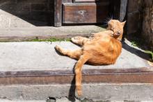 Funny Stray Orange Ginger One Cat Grooming Scratching Ears Sitting On Sidewalk Street Near Building House In Lviv, Ukraine
