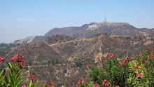 Long Shot Of The Hollywood Sign Framed By Flowers.