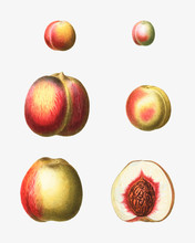Stages Of A Peach