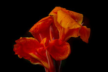 Orange Canna Flower, Tropical Flower, Canon EOS 7D