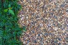 Gardening Concept, Small Pebbles With Green Plant Decorated In Garden For Walking Path. Abstract Background.