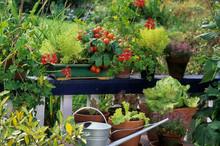 Légumes Et Plante Aromatique Sur Un Balcon