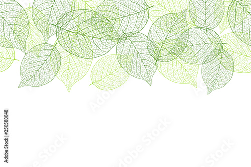 Fotografía  Fresh green seamless background material