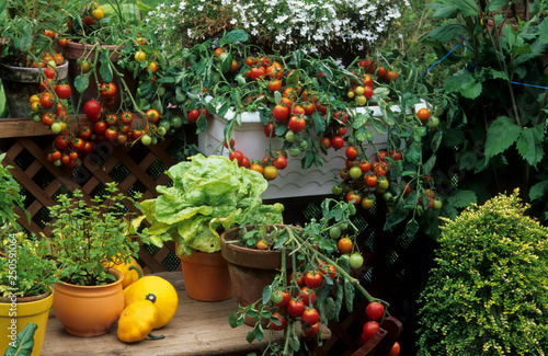 Légumes en pot sur un balcon Fototapeta
