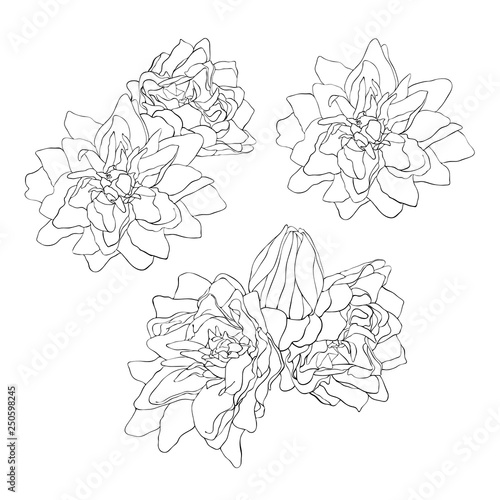 Set Of Beautiful Monochrome Sketch Black And White Flower Vector