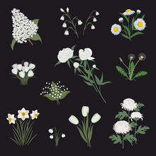 Collection Of White Flowers On...
