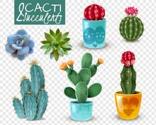 Cactus Succulent Realistic Tra...