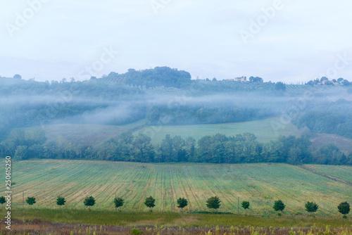 Foto  Früh morgens in den Weinbergen eines Weingutes in der Toskana im Chiantigebiet