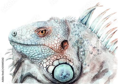 akwarela-rysunek-zwierzat-kolor