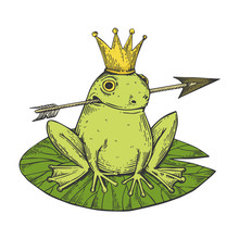 Princess Frog Fairy-tale Animal Color Sketch Engraving Vector Illustration. Scratch Board Style Imitation. Black And White Hand Drawn Image.