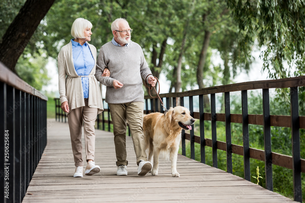 Fototapeta happy senior wife and husband walking with dog in park