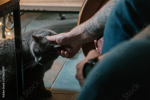 Fotografía  Man with tattooes teazing British cat on its ear with his finger