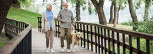 Smiling Senior Couple Walking With Golden Retriever Dog In Park