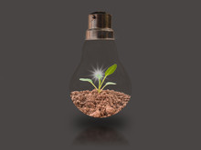 Small Seedlings In Two Bulbs On A Black Background With Energy-saving Concepts To Protect The Environment.