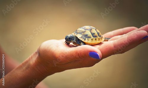 Photo  A young turtle cub in the palm of a girl is safe.