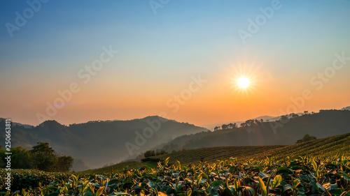 Montage in der Fensternische Blau Jeans Landscape of tea farm with sun rise 1