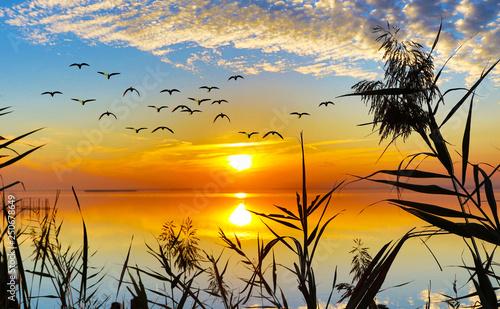 Photo sur Toile Amsterdam puesta de sol entre los arboles del lago