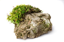 Moss And Rock On White Backgro...