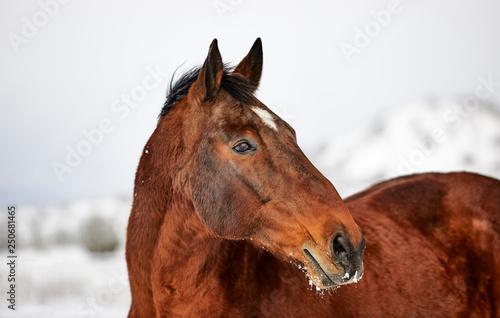 Profile of beautiful brown horse