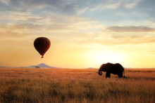 African Savanna Elephant At Sunset In The Serengeti National Park. Africa. Wildlife Of Tanzania. Artistic African Image. Free Copy Space.