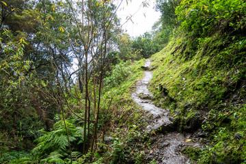 Fototapeta na wymiar Wanderweg Boca do Risco, Madeira