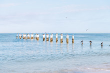 Old Naples, Florida Pier Pilings In Gulf Of Mexico With Wooden Jetty, Many Birds, Pelicans And Cormorants, Perched, Flying By Ocean Waves