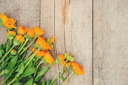 Fotografie, Obraz  The calendula extract. Medicinal plants. Selective focus.