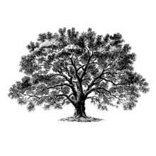 Tree 3