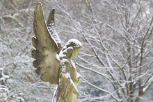 Statue Of Angel Covered With Snow At Municipal Cemetery In Amsterdam, The Netherlands