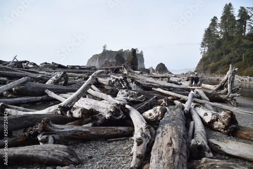 Wall Murals Nepal Olympic National Park, Washington state. U.S.A. October 17, 2017. Ruby Beach.